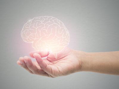 A mans hand holding a brain