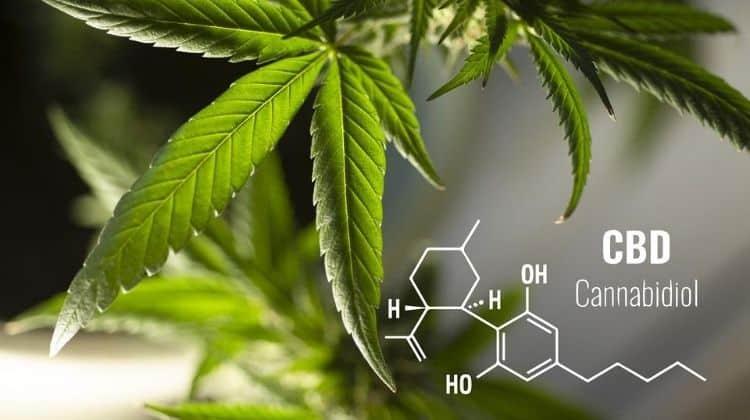CBD chemical structure and a hemp leaf